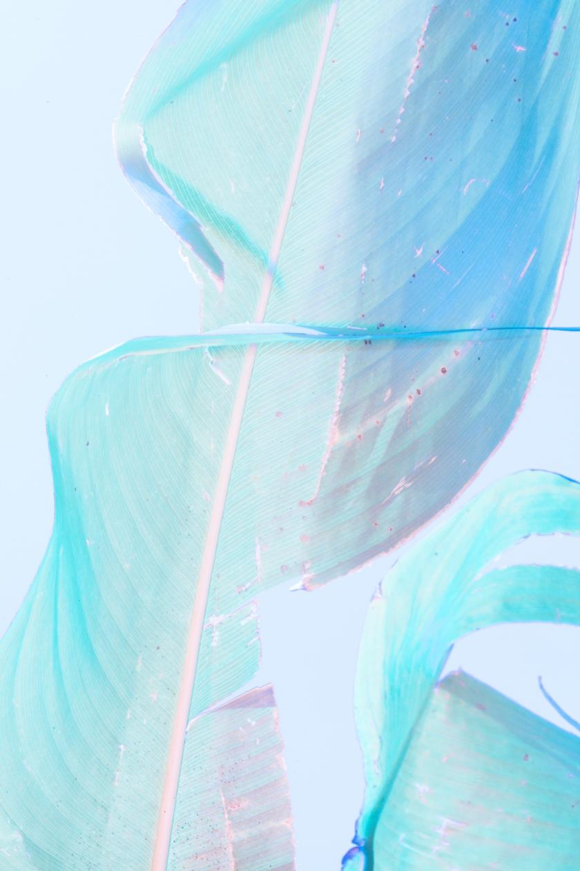 thisispaper_leaf